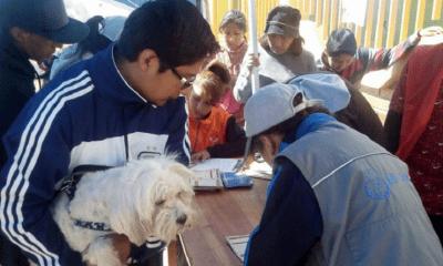 Campaña de vacunación de mascotas