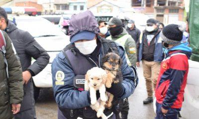 Rescatan a varios animales en la Feria 16 de Julio en El Alto La Paz