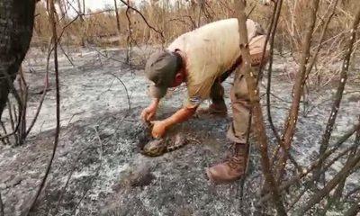 Animales en incendio