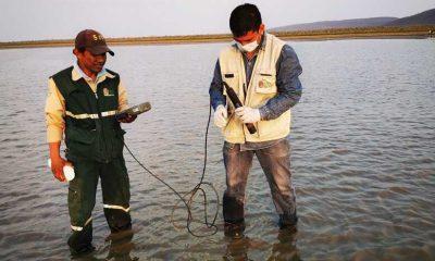 Laguna contaminada con fosfato