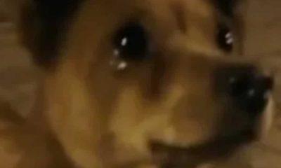 Perro llora al recibir comida