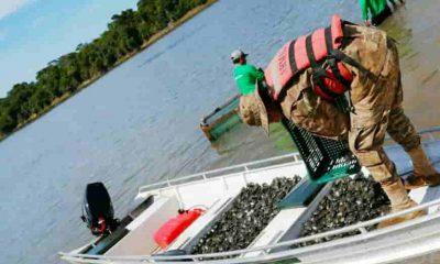 Reinserción de tortugas