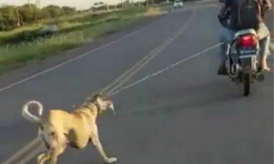 Motociclista arrastró a un perro en Santiago del Estero