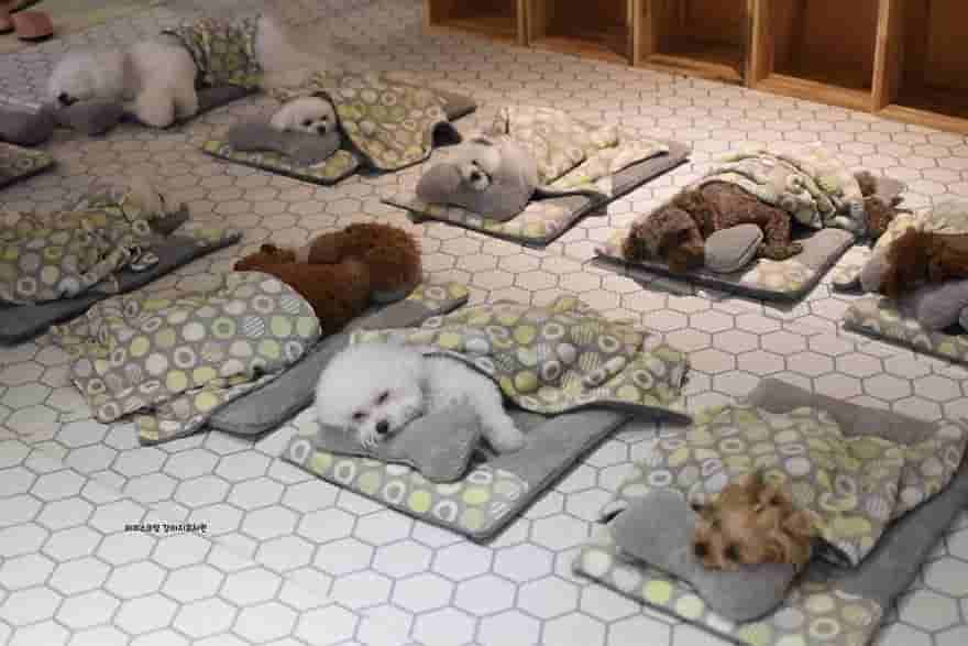 Perros durmiendo guardería canina