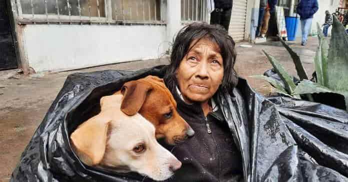 Mujer duerme con perros en la calle en Mexico