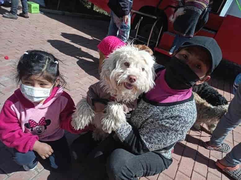 Vacuna_para_mascotas